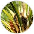 Palm Oil Industry - A Learning Experience